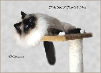 SP & GIC S*Chimär's Irina