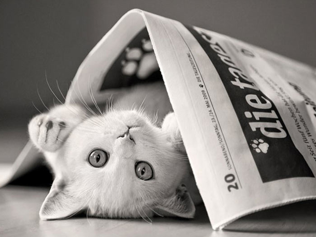 Cat-Playing-with-Newspaper